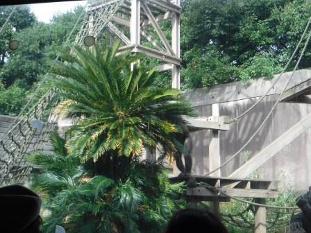 chimp1612_002.JPG