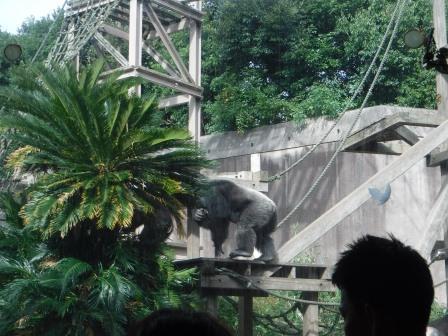 chimp1612_004.JPG