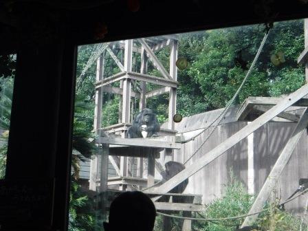 chimp1612_005.JPG