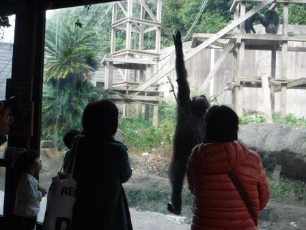 chimp1612_010.JPG