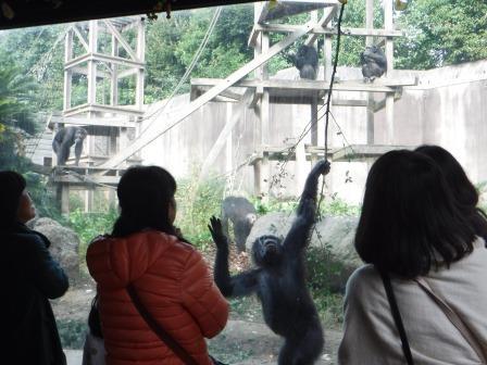 chimp1612_011.JPG