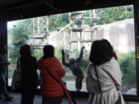 chimp1612_012.JPG
