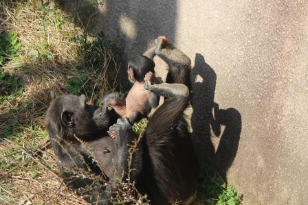 chimp_1612_008.JPG