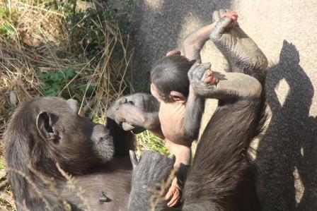 chimp_1612_010.JPG