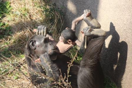 chimp_1612_012.JPG
