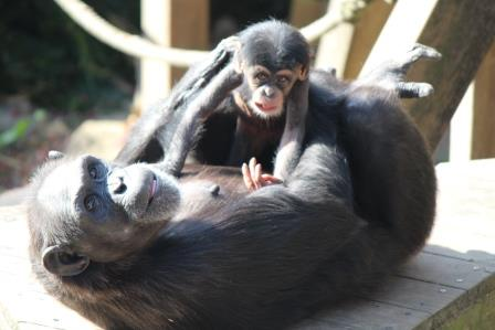 chimp_1612_020.JPG