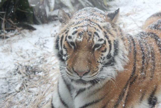 ミライと雪9.jpg