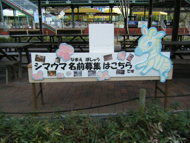 2010.12.11-3.JPG