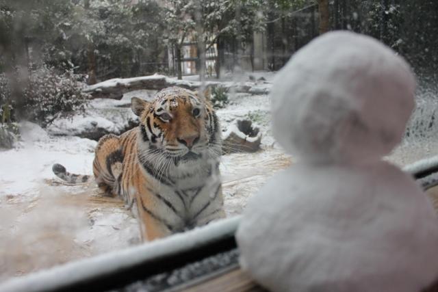 ミライと雪14.jpg