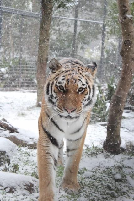 ミライと雪3.jpg