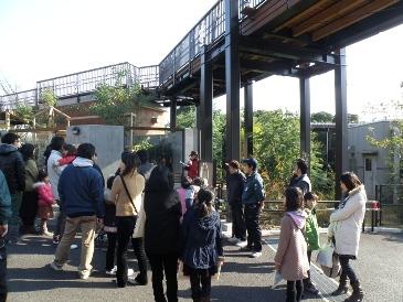 20101222アライグマ③.JPG