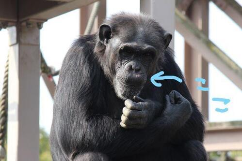 chimp20_01_013.jpg