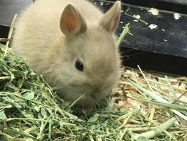 20190430-007ウサギ
