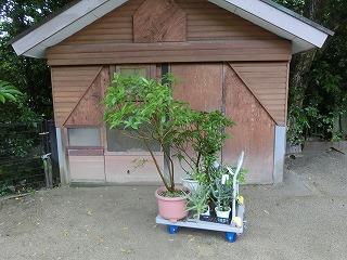 s-2植える樹木.jpg