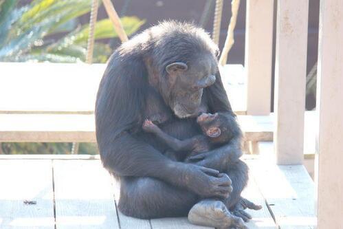 chimp2019_05_001.jpg