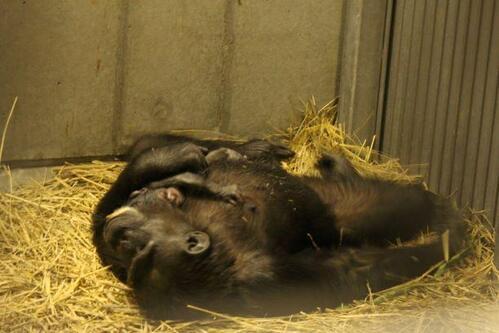 chimp2019_05_006.jpg