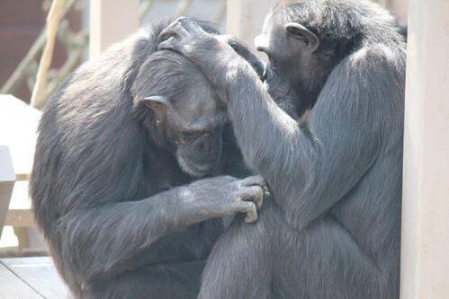 chimp2019_05_007.jpg