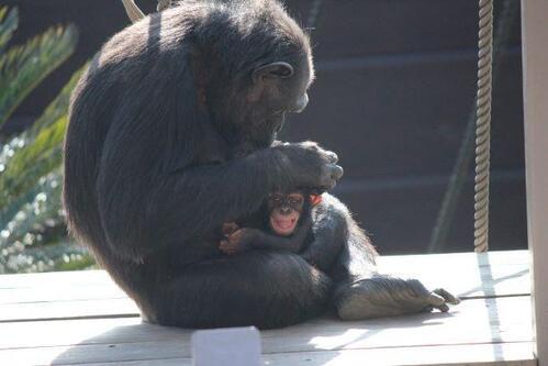 chimp2019_05_008.jpg