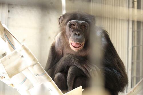 chimp2019_11_002.jpg
