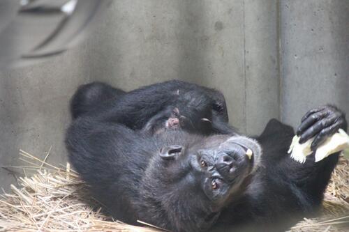 chimp2019_11_003.jpg