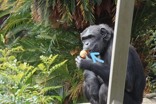 chimp20_01_007.jpg