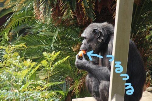 chimp20_01_009.jpg
