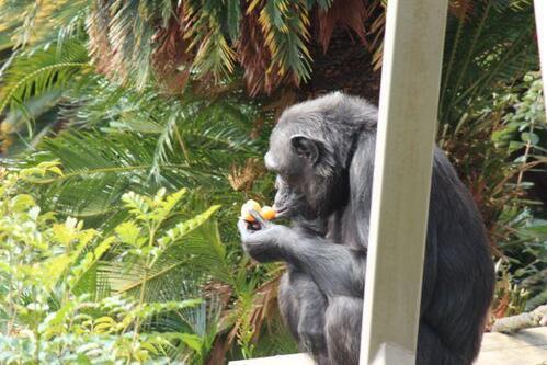 chimp20_01_010.jpg