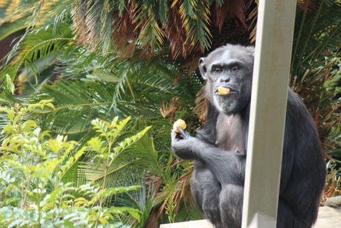 chimp20_01_011.jpg