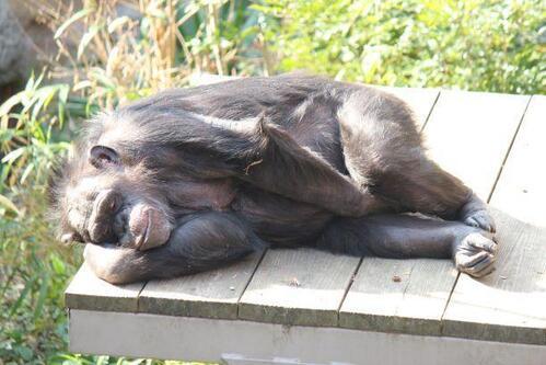 chimp20_03_001.jpg