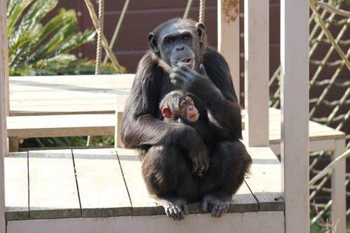 chimp20_03_006.jpg