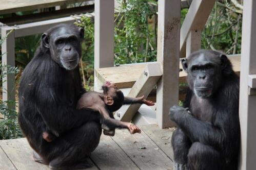 chimp20_03_007.jpg
