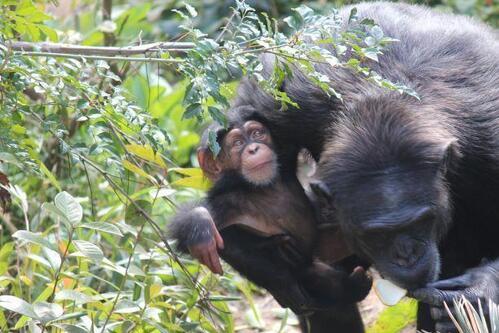 chimp20_03_009.jpg