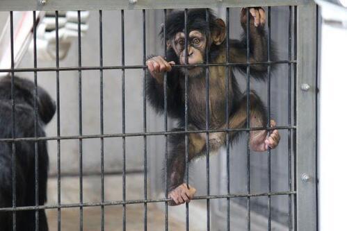 chimp20_03_012.jpg