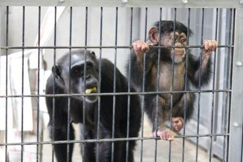 chimp20_03_013.jpg