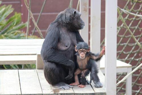 chimp20_03_014.jpg