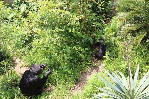 chimp20_05_001.jpg