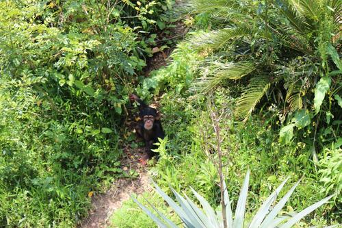 chimp20_05_002.jpg