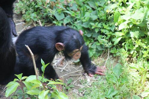 chimp20_05_003.jpg