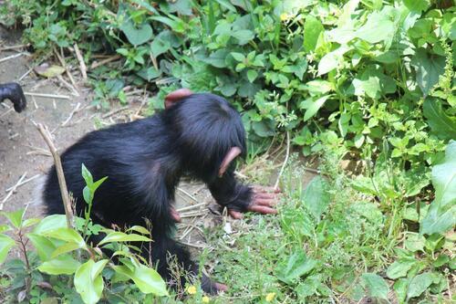 chimp20_05_004.jpg