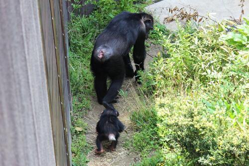 chimp20_05_005.jpg