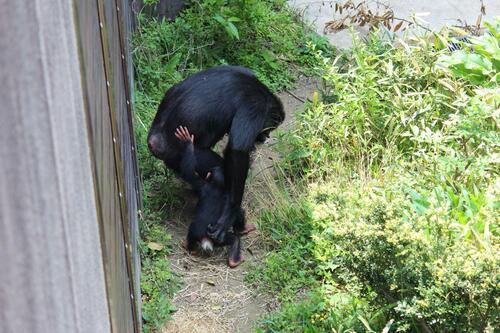 chimp20_05_006.jpg