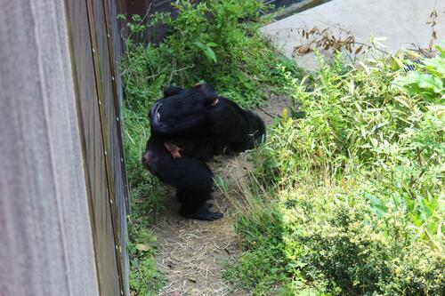 chimp20_05_007.jpg