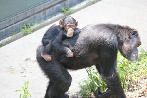 chimp20_05_008.jpg
