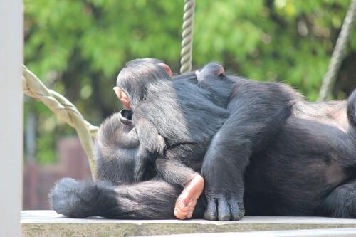 chimp20_05_009.jpg
