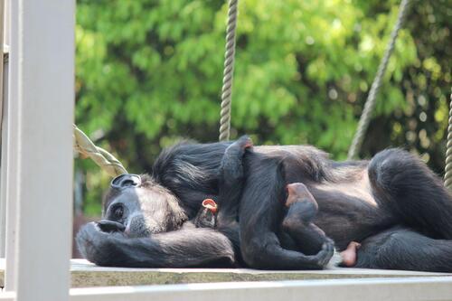 chimp20_05_011.jpg