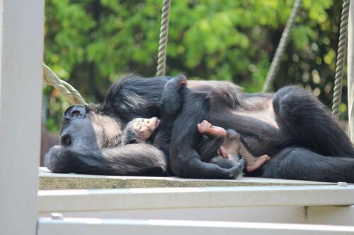 chimp20_05_012.jpg
