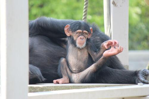 chimp20_05_013.jpg