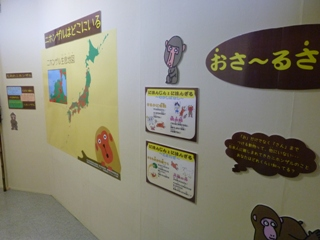 2011.11.15サル展2 (4).JPG
