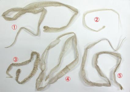 蛇の抜け殻5種.jpg