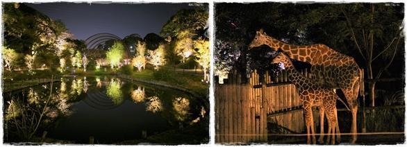 201808_夜Zoo-4.jpg